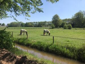 Paarden in de wei bij Dwingeloo