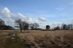 Nationale Park Dwingelderveld